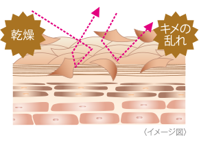 A state where the stratum corneum is not in place.  Skin image chart